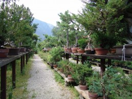 Bonsai-Gilde-on-Tour-Othmar-Auer